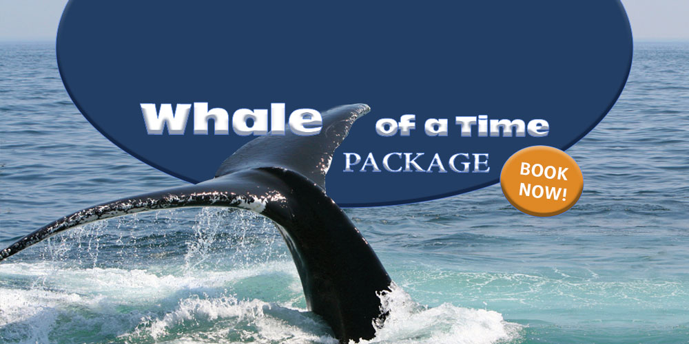 Whale of a time  Package